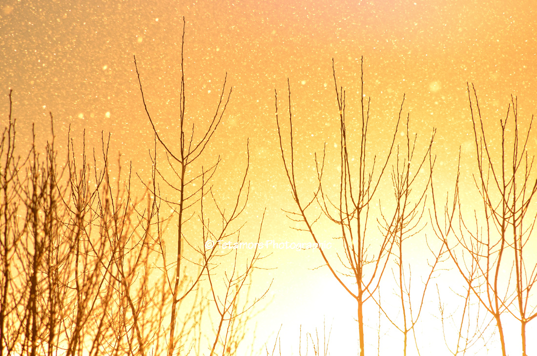 Winter Sunset with Flurries